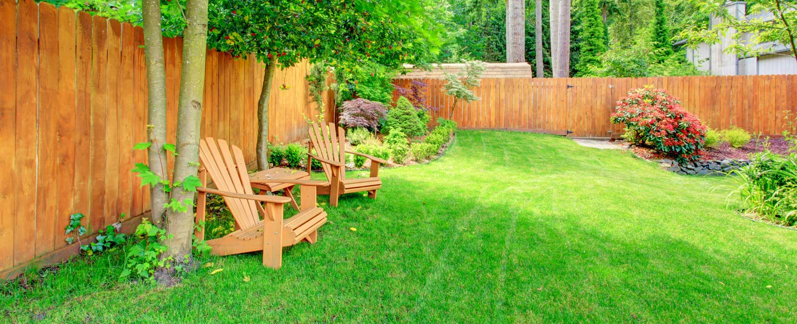 backyard lawn with landscaping