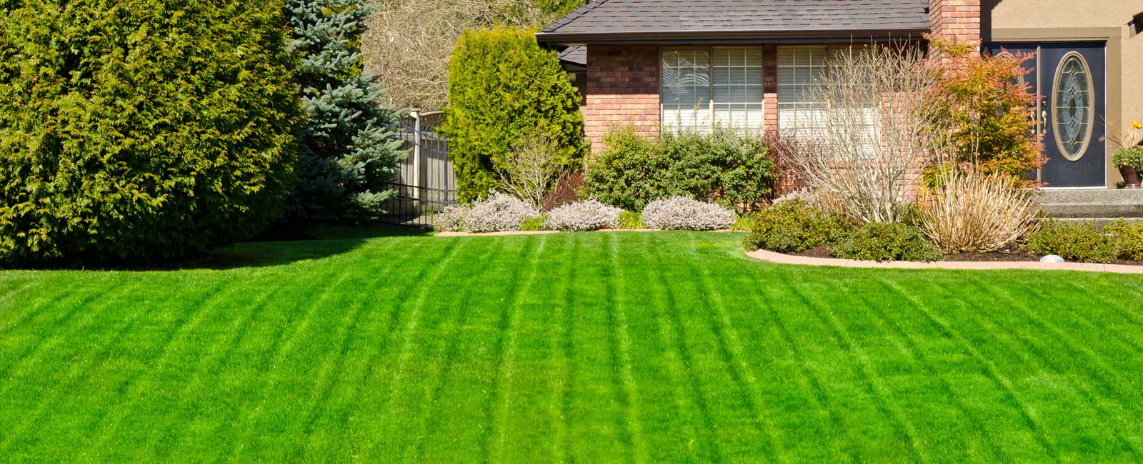 A well maintained yard that has been cared for by the experts at Delaware Valley Turf in Bryn Mawr PA