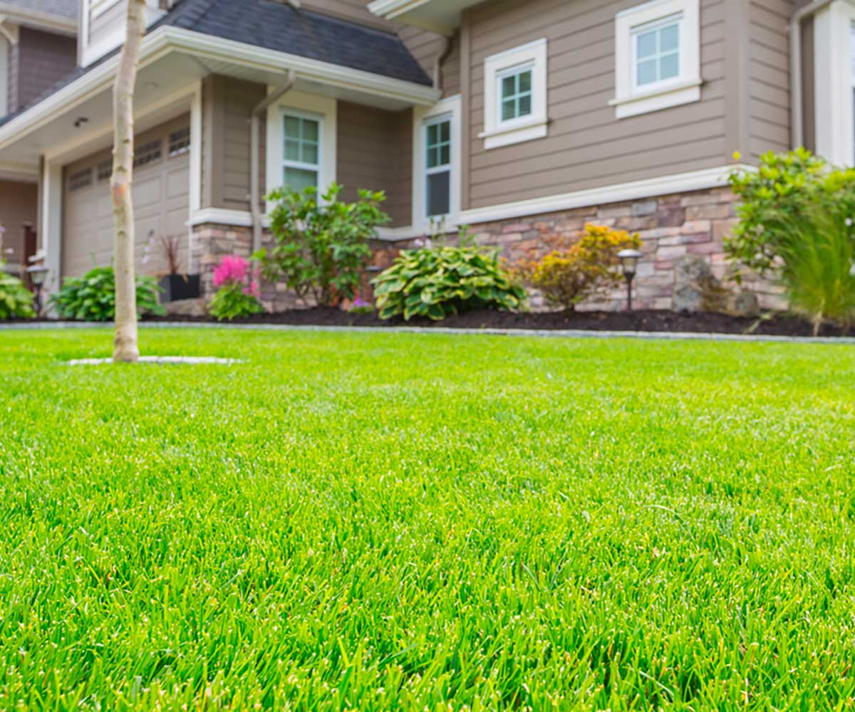 A well cared for yard by the experts at Delaware Valley Turf