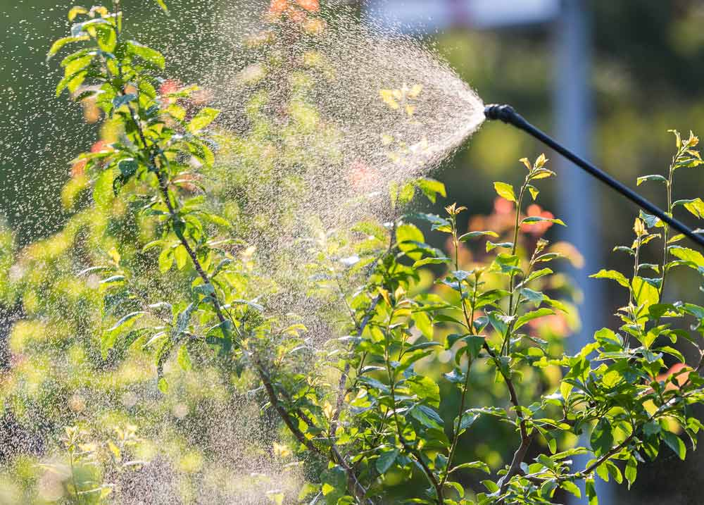 Trees & shrubs being sprayed as a part of Delaware Valley Turf's pest control program