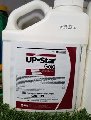 Up Star Gold sold by the experts at Delaware Valley Turf in Malvern PA