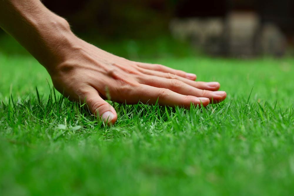 The hand of an expert technician from Delaware Valley Turf touching a well maintained lawn in Pennsylvania