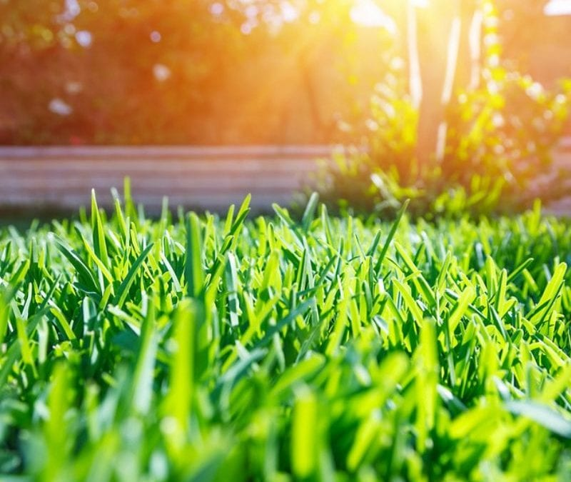 Summer lawn care will help you set your Wayne, PA lawn up for success for the rest of the year.