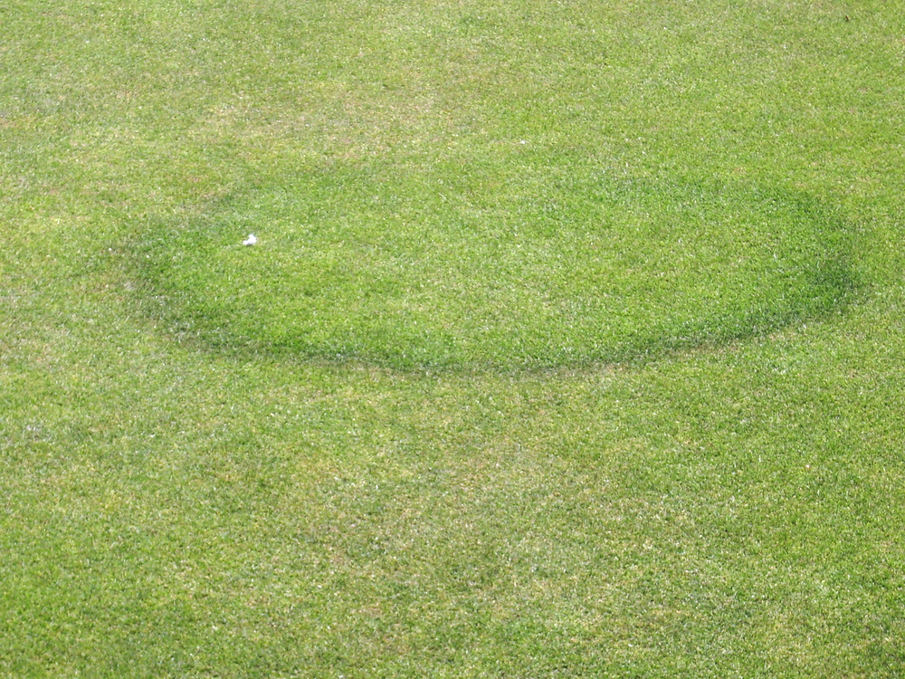 Fairy Ring on a lawn