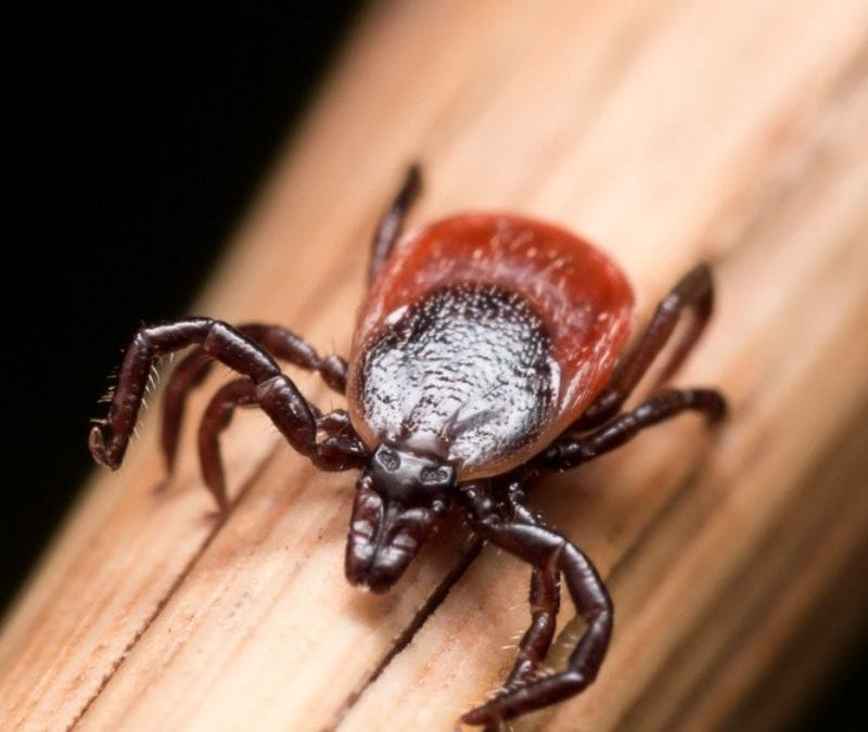 These fall tick control tips will help you turn your Malvern, PA lawn into a tick-free zone.