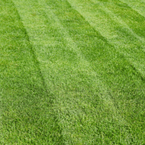 grass lines after lawn has been cut