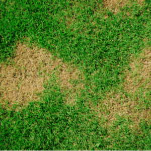 Brown patches of dead grass