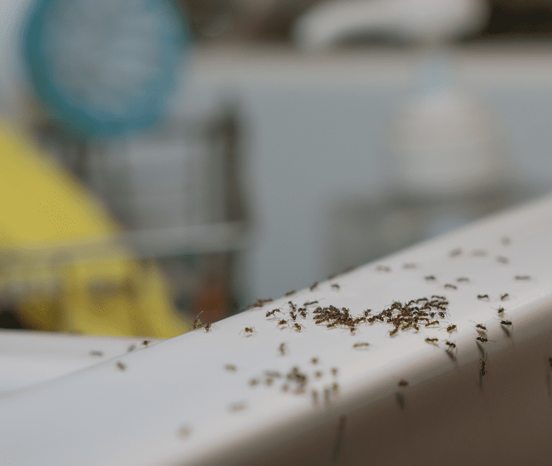 group of ants on sink in house